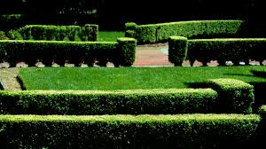 How To Trim A Hedge By Hand