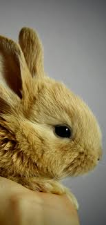 rabbit 1440x3040 wallpaper id 784894