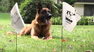 Hidden Fence Brand Invisible Fence Created Dog Fence Containment Systems 46 Years Ago Hidden Fence Pioneered Full Service Electric Dog Fence Pet Containment Solutions In Australia