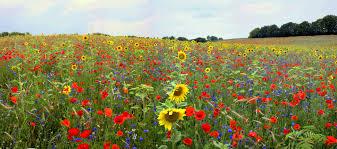 Flower - Wikipedia