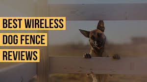 Top 10 Best Wireless Dog Fence To Buy In 2020 10 Expert Reviews