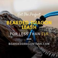 bearded dragon leash make sure you get