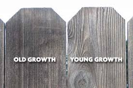 North Coast Journal Jan 27 2005 Cover Story Redwood Reckoning Enviros And Industry Debate The Quality Of Young Growth Timber