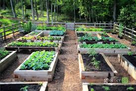benefits of gardening in raised beds
