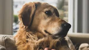 dog quotes every dog lover must information news