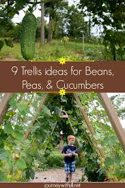Vegetables That Climb Sprawl Trellis Options For Your Garden The Beginner S Garden