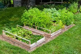 three raised garden beds growing fresh