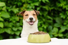the best dog food for small dogs