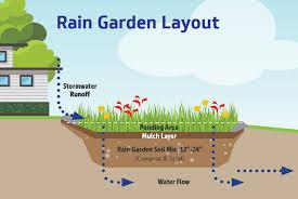 5 steps for creating a rain garden