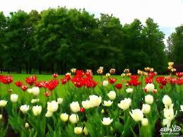 صور فصل الربيع شاهد صور لفصل الربيع كيف