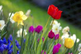 اجمل ورود الربيع الربيع و وروده البديعه اغراء القلوب