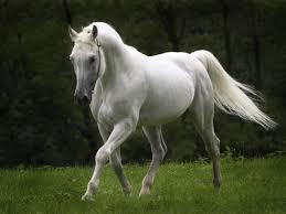 صور حصان صور خيل حلوه قلوب فتيات