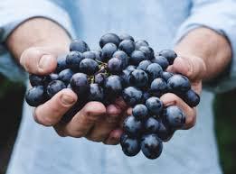 best homemade blueberry wine recipe