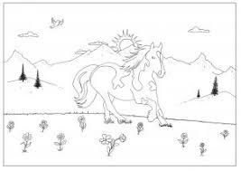 Paardenpret Stegeman Ruitersport