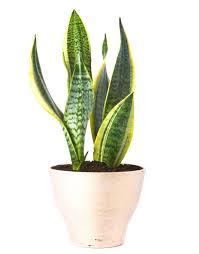 z plantas bonitas de interior a