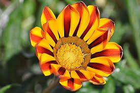 Belle fleur : Fleurs : Agadir : Côte atlantique : Maroc : Routard.com