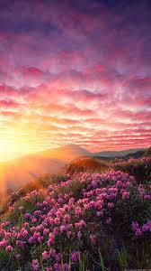 sky nature pink natural landscape