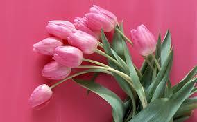 خلفيات أزهار بالقراءة نسمو