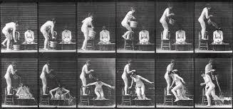 Muybridge Images Photograph by Eadweard Muybridge