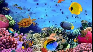 moving aquarium wallpapers on wallpaperplay