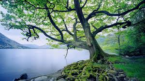 nature wallpapers best 44796