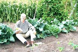 organic fertilizer for vegetable garden