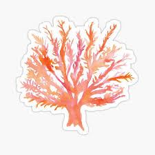 Coral Stickers Redbubble