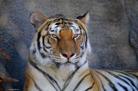 صور حيوانات رمزيات حيوانات خلفيات رائعة رمسة عرب