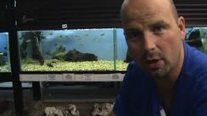 Aquarium Advice Gravel Or Sand By Pondguru Youtube