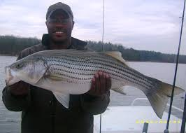 lake lanier striper fishing is good