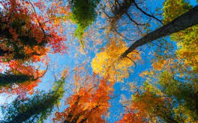 fall hd wallpapers background images