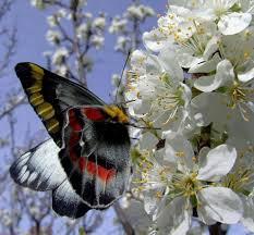 صور طبيعية فراشات ملونة وجميلة على زهور و ورود جذابه ذات