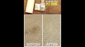 dog urine from carpet with vinegar