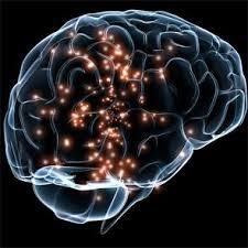 La diabetes de tipo I modifica la conectividad cerebral ...