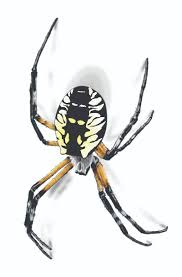 garden spider facts control get rid