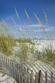 Peaceful Secluded Beach Scene Sand Dunes Sea Oats Dune Fence Beach Scenes Beach Landscape Beautiful Beach Pictures