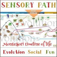 Montessori Timeline Of Life Floor Wall Decals Sensory Path Second Cosmic Lesson