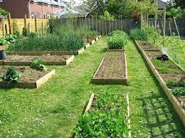 engaging backyard kitchen garden ideas