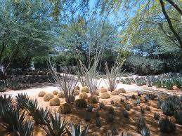 sunnylands cactus garden picture of