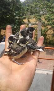 Angka Jitu Mimpi Dihinggapi Burung Gelatik Kotakbet Terbaru