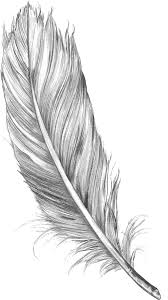 feather sketch hd png