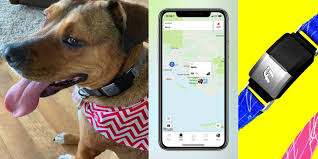 Review Fi Smart Collar Uses Gps And Lte To Track Your Dog S Location On Your Iphone 9to5mac