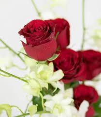49 Best موسوعة الورد Images Rose Flowers Beautiful Roses