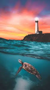 the turtle and the lighthouse by
