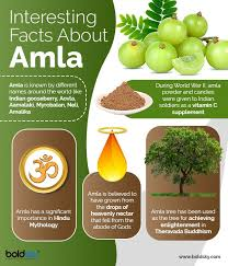benefits of amla for hair and how to