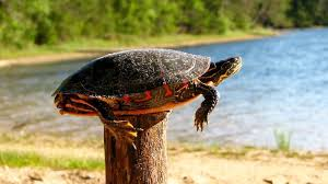 Turtles And Fence Posts Sometimes We All Need A Hand Progressology