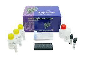 mouse cytokine array q640 qam caa 640