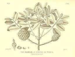 the history of sumatra