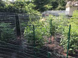 1 Roll Of Fence 5ft X 50ft 31 4 Tomato Cages 5ft Tall And About 5ft Across Gardening