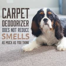 carpet deodorizer does not remove